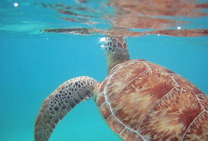turtle beach tulum mexico