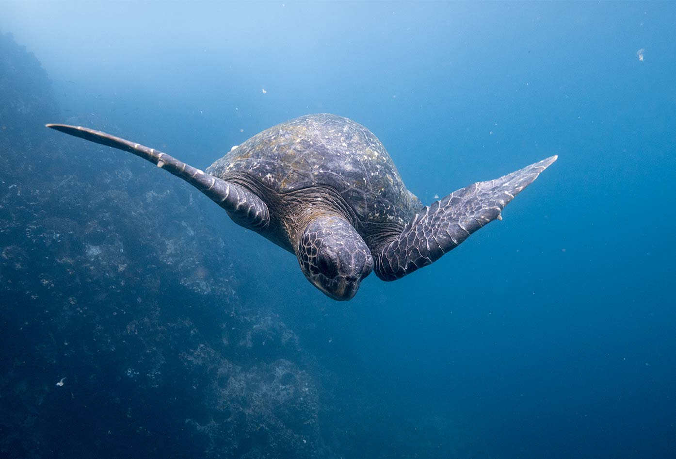 visit galapagos islands ecuador