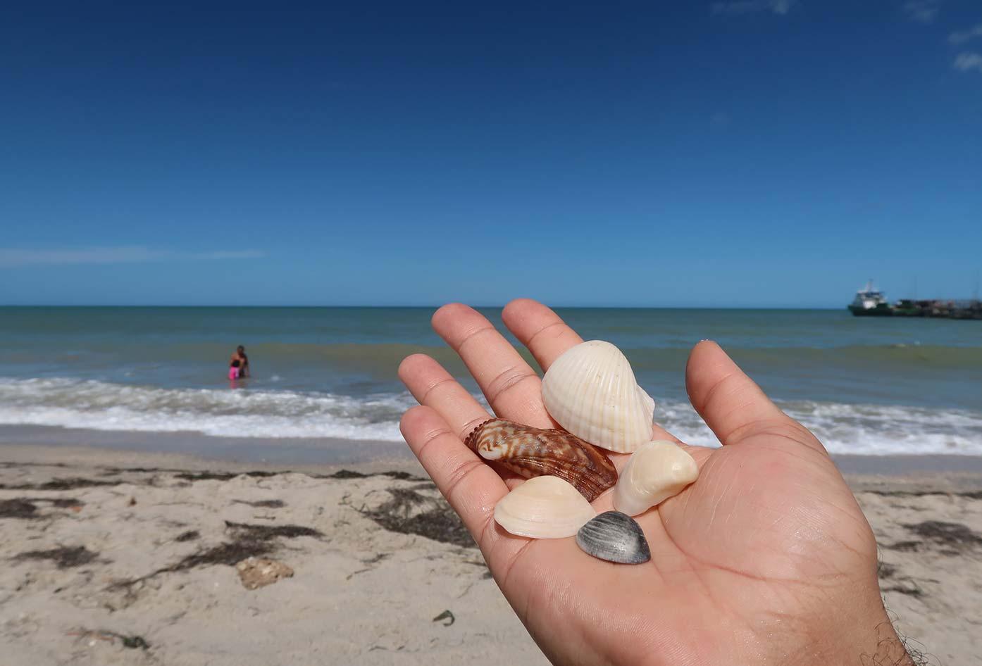shells on the beach riohacha
