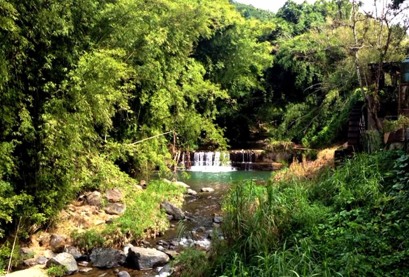 maricao jungle