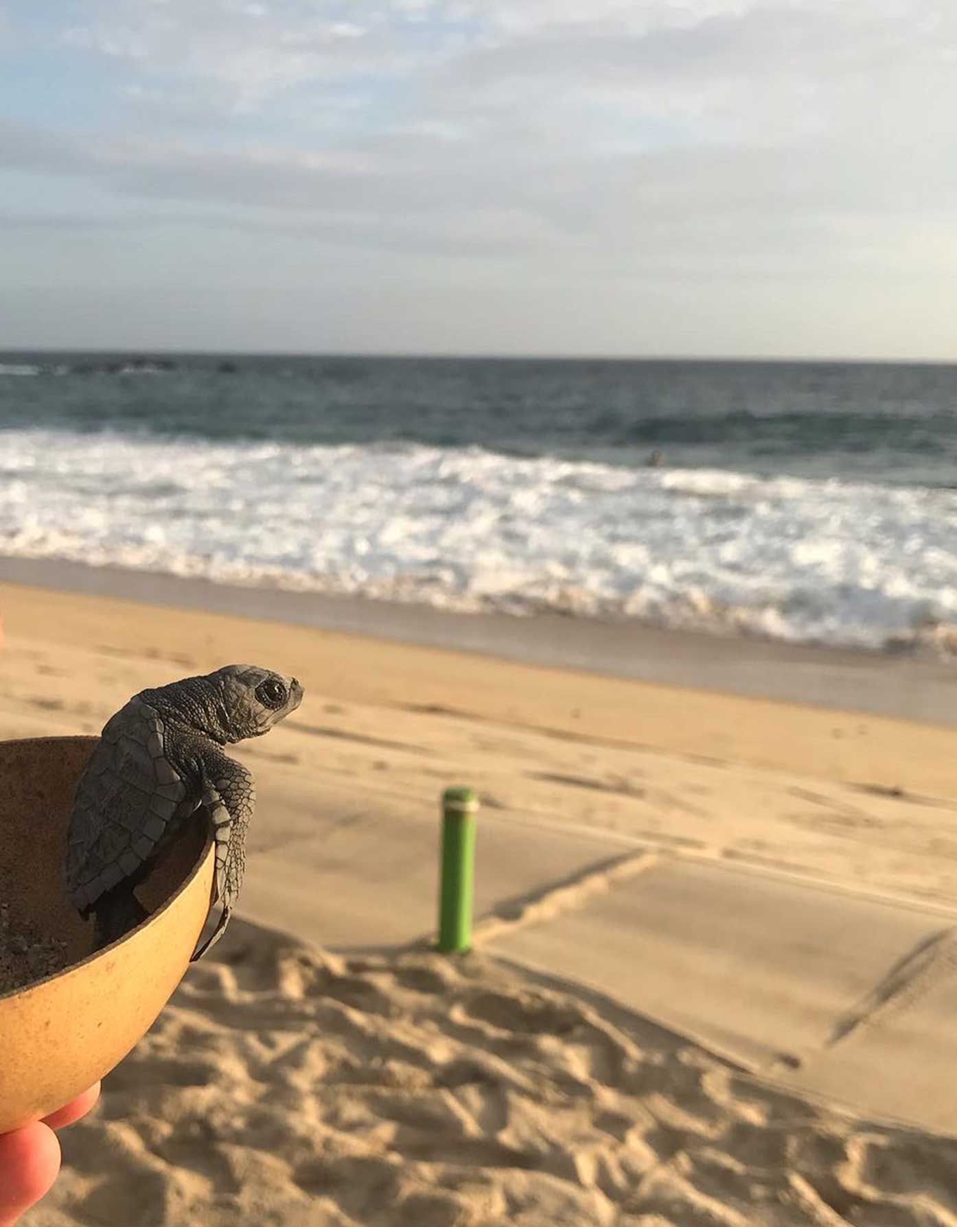 turtle sanctuary oaxaca