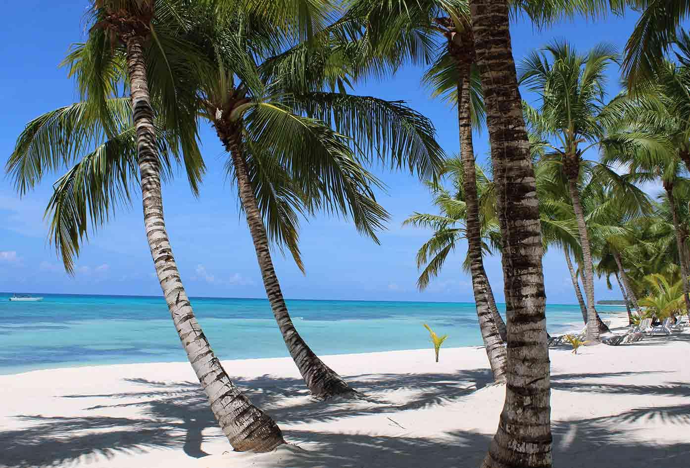 saona island palm trees