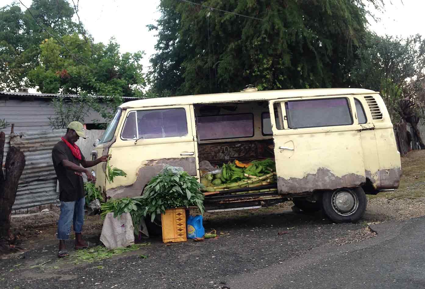 jamaica roadside herbs