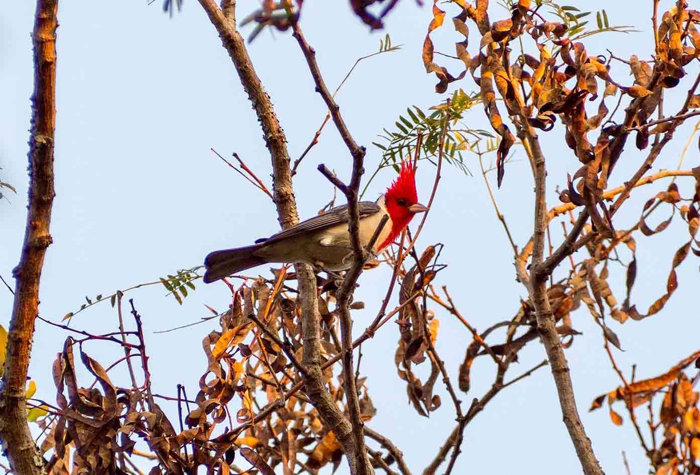 paraguay wildlife