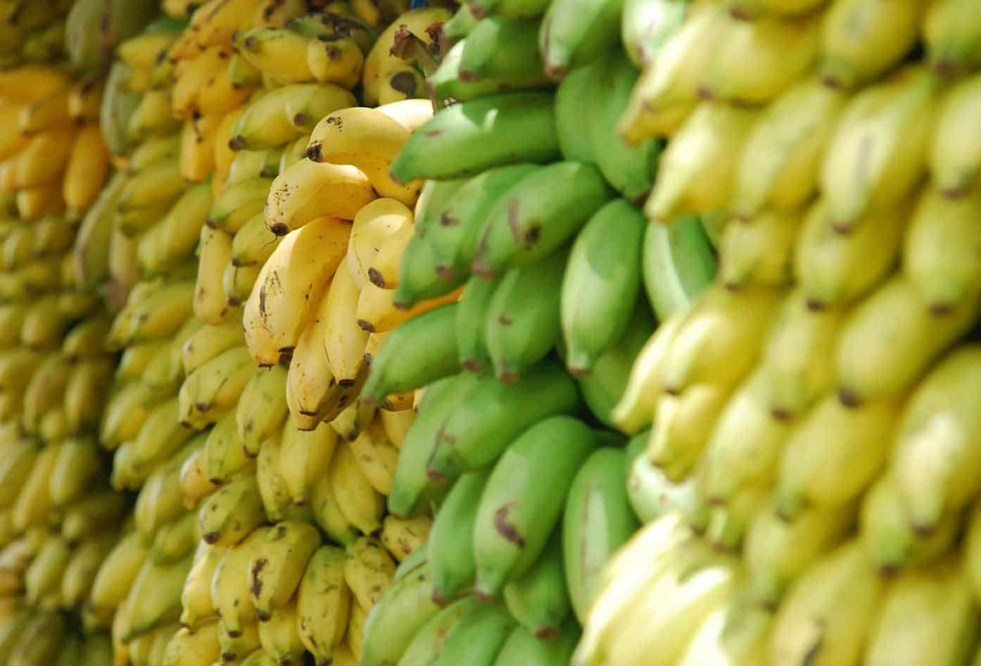 bananas honduras